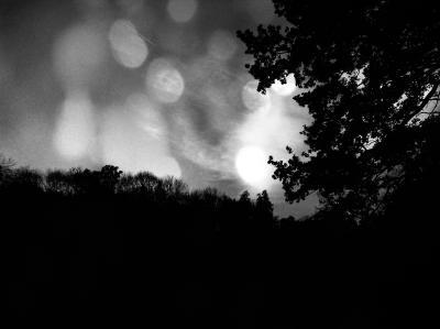 dunkler-Wald-unter-leuchtendem-Himmel