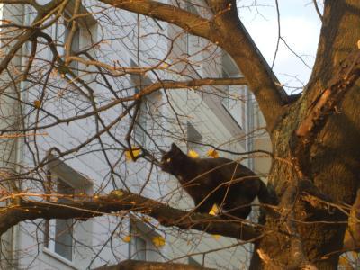 schwarze-Katze