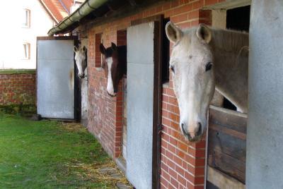 Da steht ein Pferd vor der Tür.. pension29.de