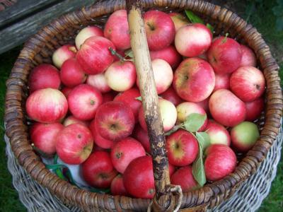 ApfelernteAugust2010