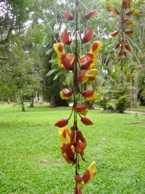 Rio de Janeiro Botanischer Garten 1