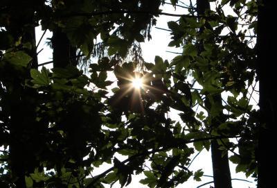 Sonnenstrahllein