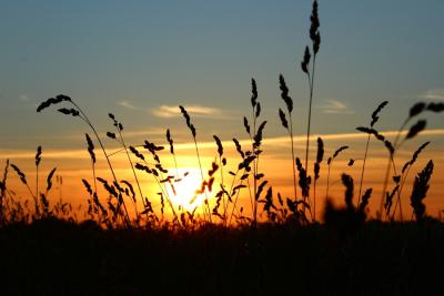 Sonnenuntergangfeld2