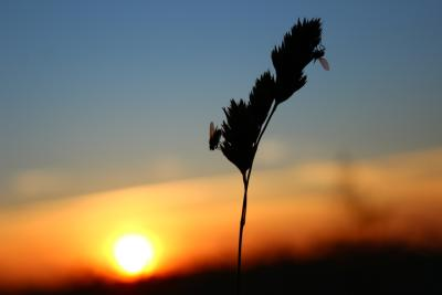 Sonnenuntergangfeld5