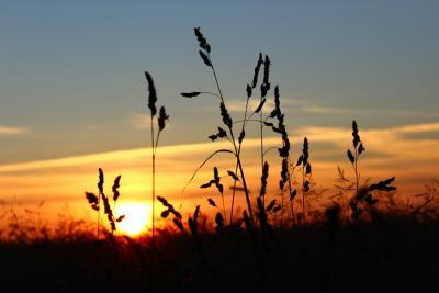 Sonnenuntergangfeld6