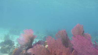Unter der Wasseroberfläche...