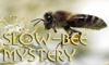 Click here to join slow-bee-mystery