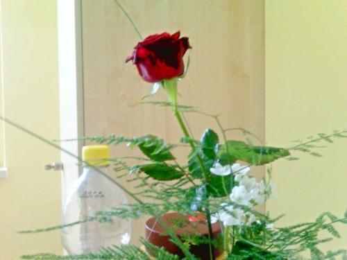 Colas-Rose-02