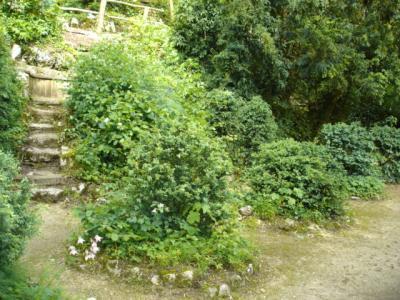 Ermitage-Waldbrudergarten3