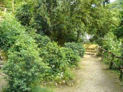 Ermitage-Waldbrudergarten4
