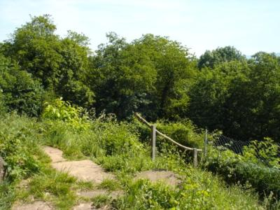 Schlosspark-Hugstetten-Aufstieg-zum-Belvedere