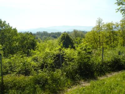 Schlosspark-Hugstetten-Aussichtspunkt1