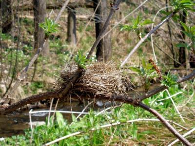 Nest-Wer-jetzt-ein-Nest-hat-