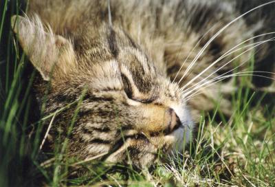 Katzenmami2-jpg