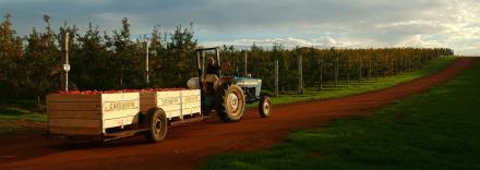 Bunki-mit-Traktor