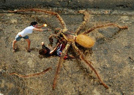 Kampf-mit-Spinne