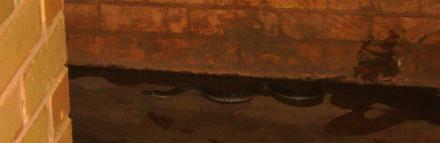 Schlange-in-Shepparton