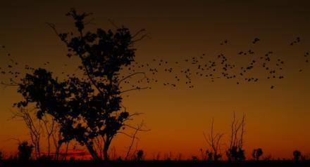 Vogelschwarm-vor-Sonnenuntergang