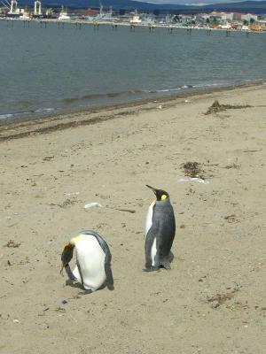 Pinguine_mit_Land