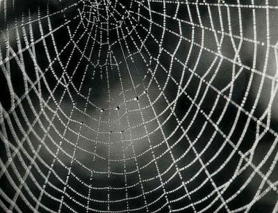 Radnetz einer Kreuzspinne; Quelle: Wikipedia