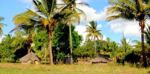 rechts und links vom Highway - Rundhütten, Palmen und jede Menge Natur