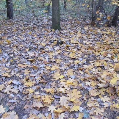 Herbstlaub-2011