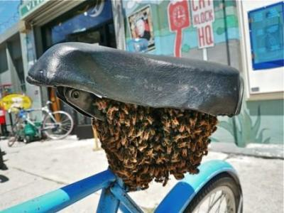 bee_seat