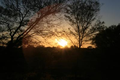 Sonnenaufgang-Baum