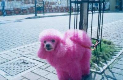 pink-pudel