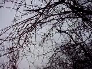 greywoods