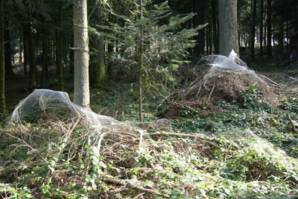 Spinnwebskulpturen, Huttwil (Schweiz) Foto: Vreni Schaller, 2009
