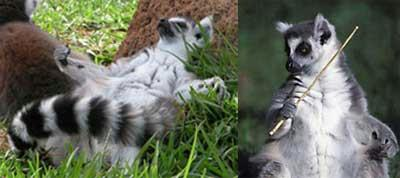 lemurenpascha