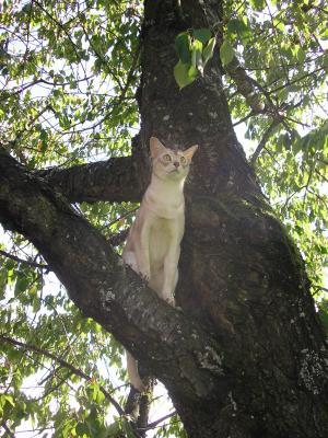 omar-auf-dem-kirschenbaum