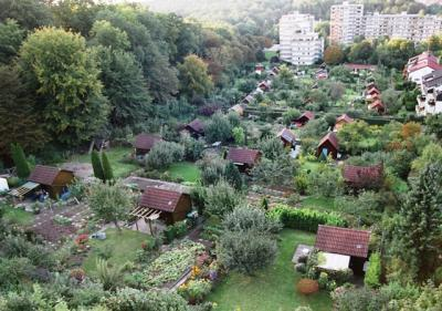 Steigerfoto-Kirschwiese-070914
