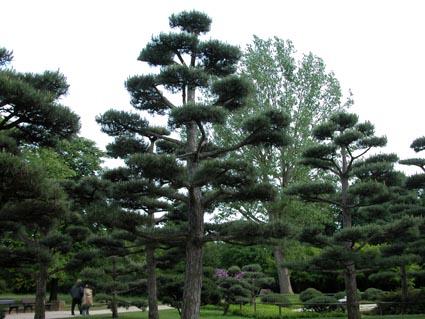jap-Garten2