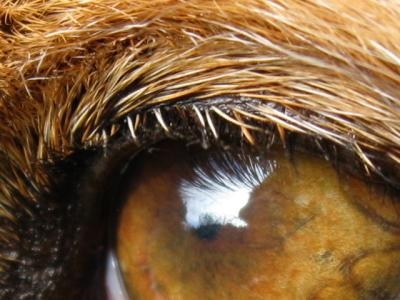 stopers_eye