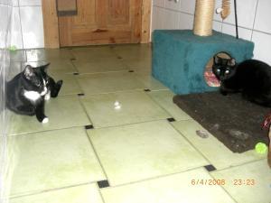 Meine-Katzenkinder-1