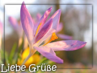 050324_2000_liebe_gruesse