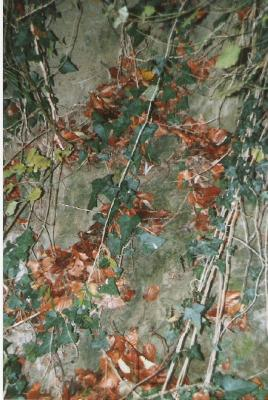 Herbst1-1