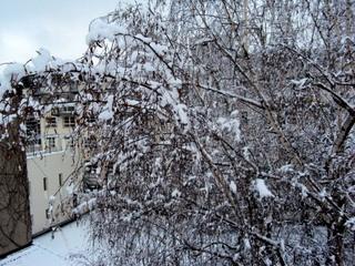 Schnee110119