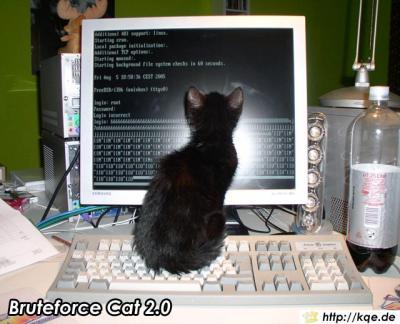 bruteforce-cat