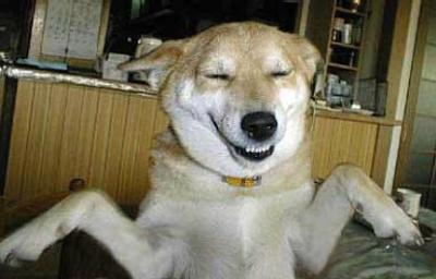 Hund-freu.jpg