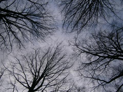 Liebende Güte von Bäumen
