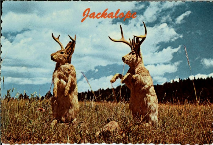 stumbled across jackalopes during the last weeks, on some newsfeed ...