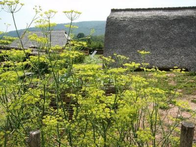 Bauernhaus und Grubenhaus
