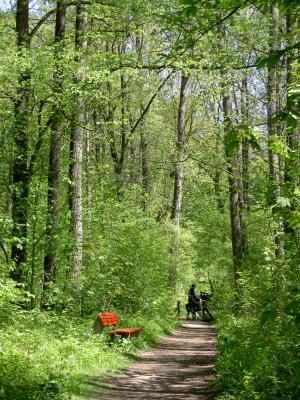 Malerische Radwege durch den Wald...