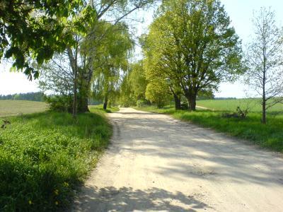 Baum und Feld...