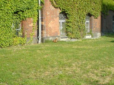 Der Fuchs...