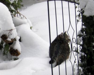 Kater im Schnee