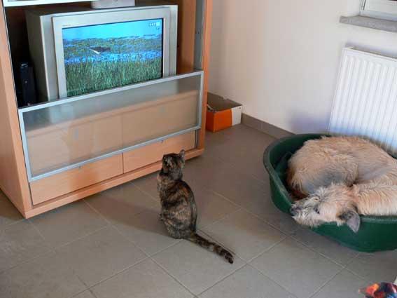Katze-sieht-fern